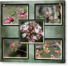 Spring Is Here - Green Acrylic Print