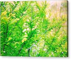 Spring Cypress Beauty Acrylic Print by Belinda Lee