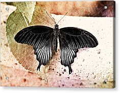 Spring Is Here Acrylic Print by Floyd Menezes