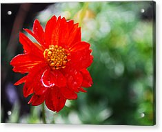 Spring Is In The Air Acrylic Print by Becky Furgason