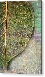 Spring Leaf Acrylic Print