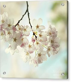 Acrylic Print featuring the photograph Spring Light by Sylvia Cook