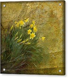 Spring Acrylic Print by Liz  Alderdice