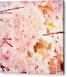 Spring Love Acrylic Print by Angela Doelling AD DESIGN Photo and PhotoArt