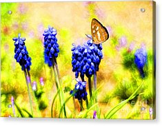 Spring Magic Acrylic Print by Darren Fisher