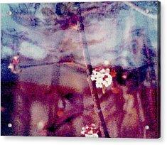 Spring-mirror Acrylic Print by Dorothy Rafferty