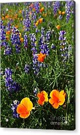 Spring Mix Acrylic Print