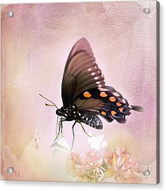 Spring Morning Acrylic Print by Betty LaRue