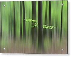 Spring Morning Acrylic Print by Huib Limberg