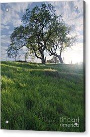 Spring Oaks Acrylic Print by Stu Shepherd