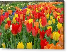 Spring Of Glory Acrylic Print