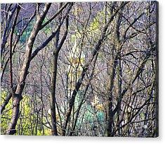 Spring Acrylic Print by Oleg Zavarzin