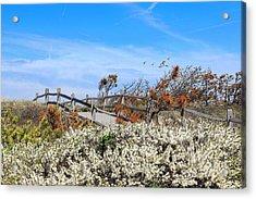 Spring On Cape Cod Acrylic Print