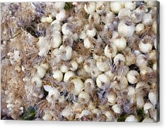 Spring Onions At The Market Acrylic Print by Michelle Calkins