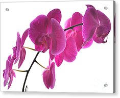 Spring Orchids Acrylic Print