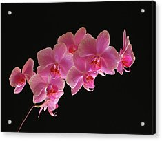 Spring Orchids Acrylic Print by Juergen Roth