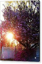 Spring Paradise Acrylic Print