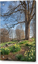 Spring Path Acrylic Print by Bill Wakeley