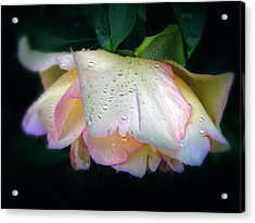 Spring Pearl Acrylic Print by Jessica Jenney