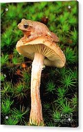 Spring Peeper On Mushroom Acrylic Print by Gary Meszaros
