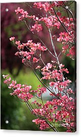 Spring Pink And Green Acrylic Print by Carol Groenen