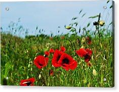 Spring Poppy Field Acrylic Print by Marina Slusar