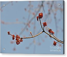 Spring Promise Acrylic Print by Jola Martysz