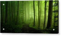 Spring Promise Acrylic Print by Norbert Maier