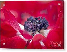 Spring Red Acrylic Print by Jacky Parker