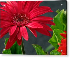 Spring Red Acrylic Print