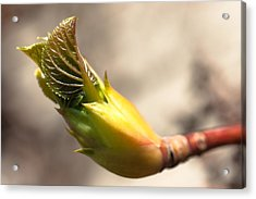 Spring Renewal Acrylic Print