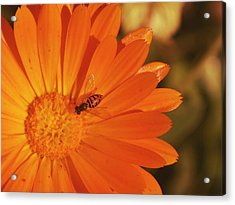 Acrylic Print featuring the photograph Flower And Bee by Rima Biswas