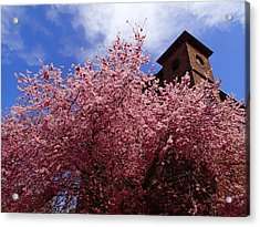 Spring Acrylic Print by Robert Nickologianis