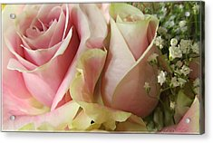 Spring Romance Pink Roses Acrylic Print by Danielle  Parent