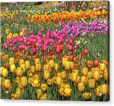 Spring Sensations Acrylic Print