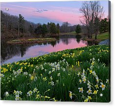 Spring Serenity Acrylic Print by Bill Wakeley