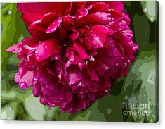 Spring Shower Peony 2 Acrylic Print by Jeanette French