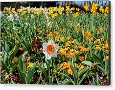 Spring Smiles Acrylic Print