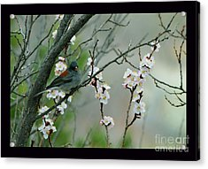 Spring Snow In Apricots Acrylic Print