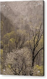 Spring Snow Acrylic Print by Tom  Reed