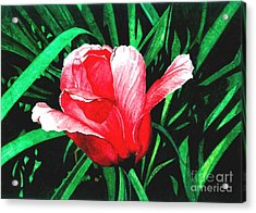 Acrylic Print featuring the painting Spring Solo by Barbara Jewell