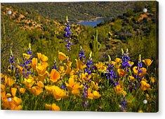 Spring Southwest Style  Acrylic Print