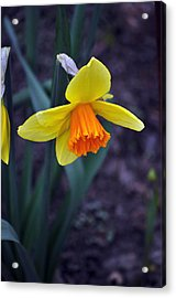 Spring Time Acrylic Print by Larry Jones