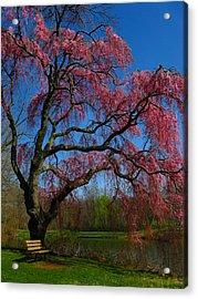 Spring Time Acrylic Print by Raymond Salani III