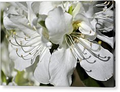 Spring Time Acrylic Print by Sandy Molinaro