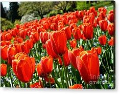 Spring Time Tulips 3 Acrylic Print by Terry Elniski