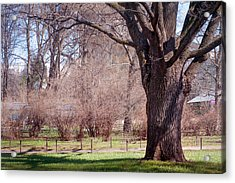 Spring Tree At Soft Rosy Spring In The Garden Acrylic Print by Jenny Rainbow