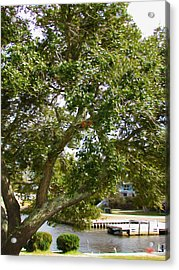 Spring Tree With Fresh Green Leaves Acrylic Print by Lanjee Chee