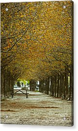 Acrylic Print featuring the photograph Spring Trees Blossoming In Montreal by Sandra Cunningham