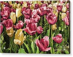 Spring Tulips Acrylic Print by Linda Blair